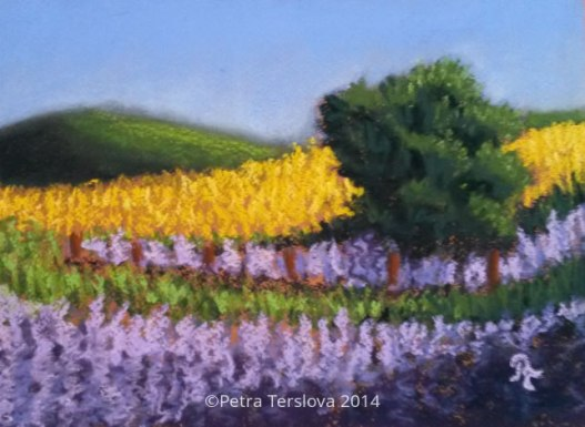 Lavenders field, Pastel, © Petra Terslova 2014